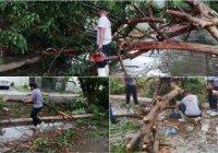 Fuertes vientos y lluvia, deja en Armería árboles caídos, viviendas dañadas y cortes de energía eléctrica
