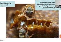 Presentan estudio sobre abejas, microorganismos y pesticidas