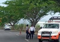 Atiende PC Tecomán, calendario de poda y derribo de árboles dentro de la zona urbana
