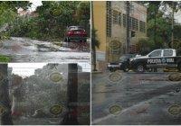 En Colima, descargas eléctricas derrumban dos árboles sobre avenida 20 de Noviembre