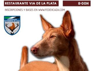 El Campeonato de Extemadura de Trabajo para Podenco Andaluz y Maneto se celebrará el 30 de marzo en Mérida