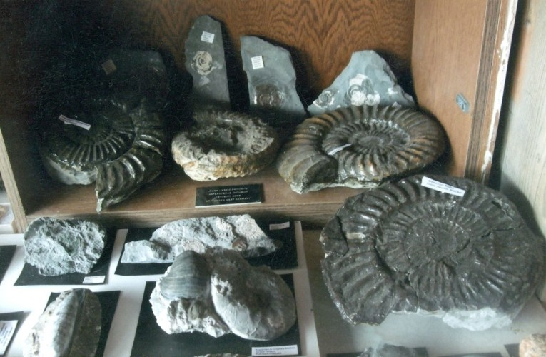 Thirty five years of fossil collecting