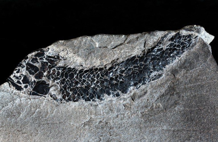Fossil fishes of the Old Red Sandstone of Scotland