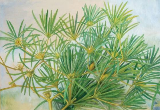5-williamsoniaceae-painting