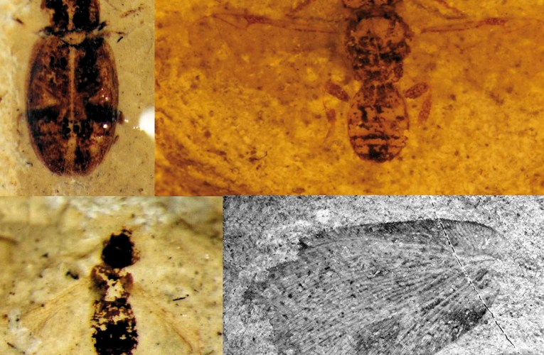 Fossil insects from the Lower Cretaceous of southern England