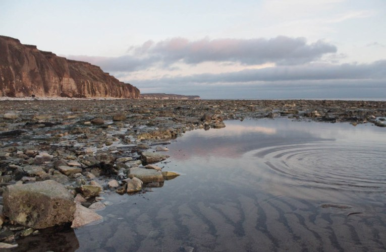 Fossil hunter's guide to the Yorkshire coast