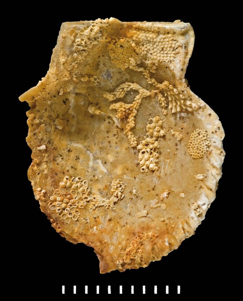 figure-3-encrusted-p3a853a