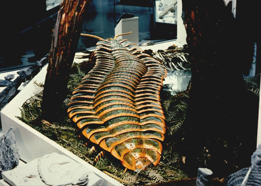 Life-size reconstruction of Arthropleura created by Mr. Werner Kraus of Aachen University, Germany. Copyright - W. Kraus, RWTH-Aachen, Germany.