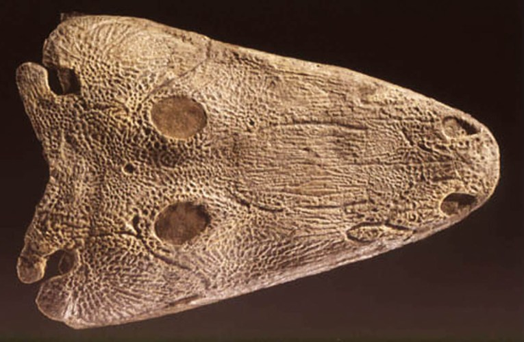 Antarctic amphibian from 245 million years ago