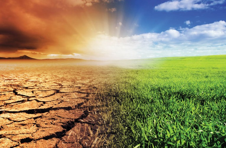 Warming medieval climate supports a revolution in agriculture