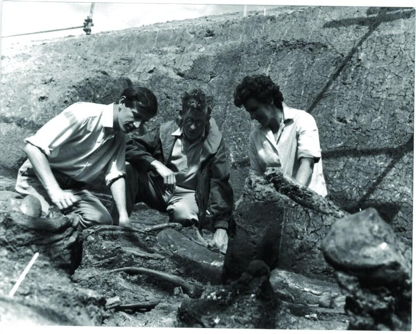 Aveley Elephants 1964 003