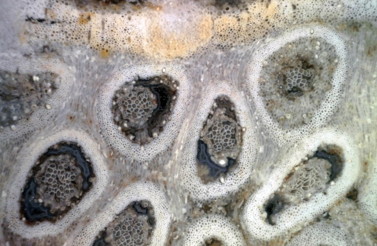 Images of cells preserved in stone