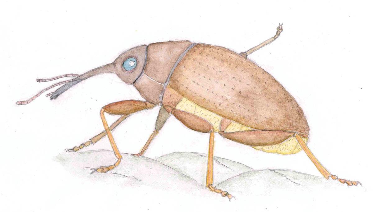 Wealden insects: an artist's update (Part IV)