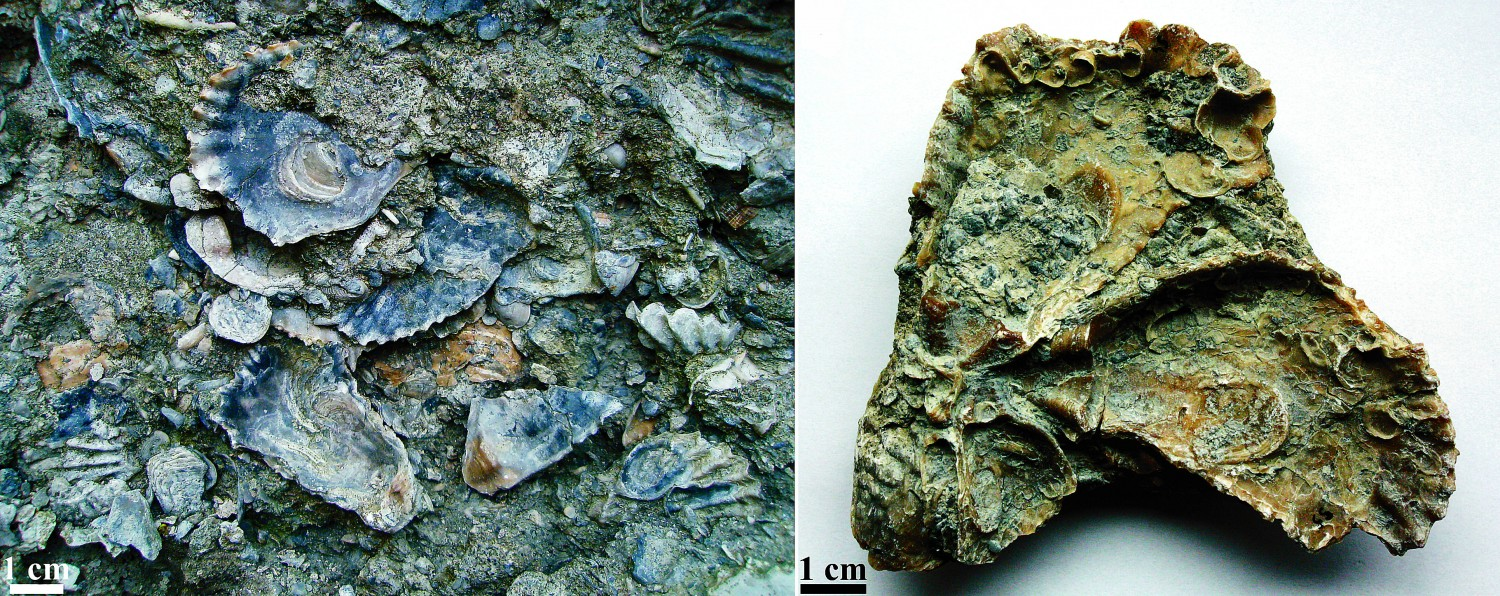Colonising skeletal substrates: Encrusters and borers from the Upper Jurassic oyster shell beds of Central Poland