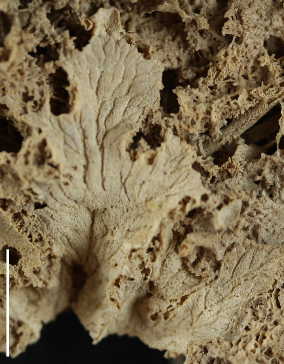Discovering the world of fossil fungi