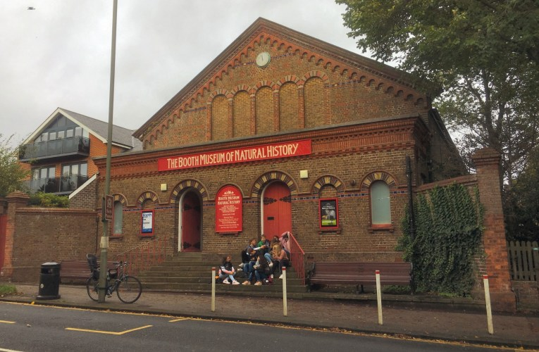 Geology museums of Britain: The Booth Museum of Natural History, Brighton