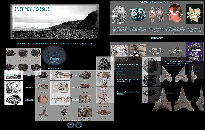 Sheppeyfossils.com: The genesis of a website