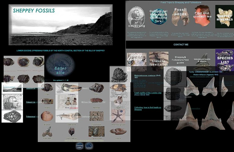 Sheppeyfossils.com: The genesis of a website