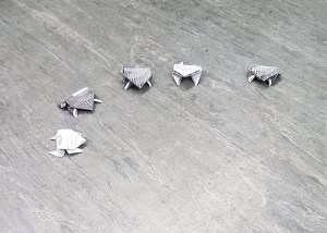 Five origami frogs sit on the floor in a semi circle