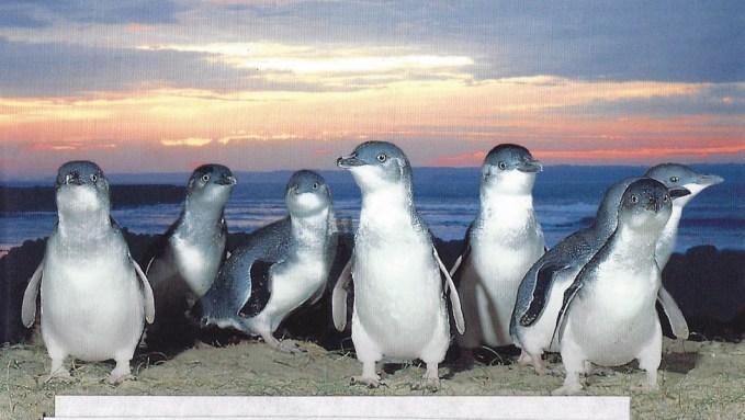 Alicia went to Phillip Island, Australia.