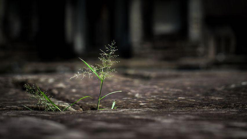 De moed om kwetsbaar te zijn – 13 maart