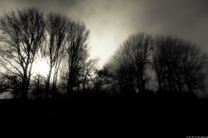 Foto-3791