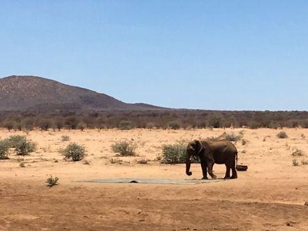 BMW Driving Experience ein Elefant