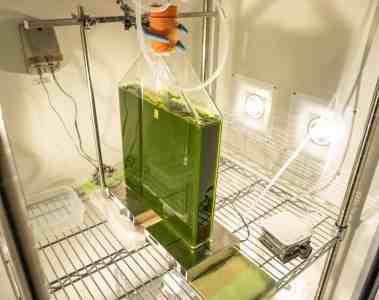 Mazda setzt auf Biokraftstoff aus Algen