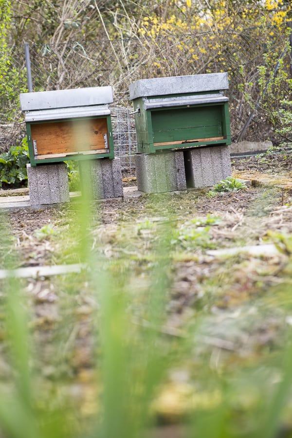 Bienen in der Stadt