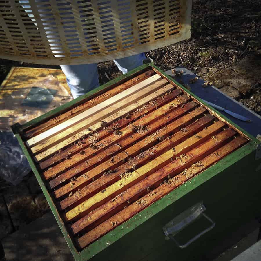 Bienen Honigraum aufsetzen