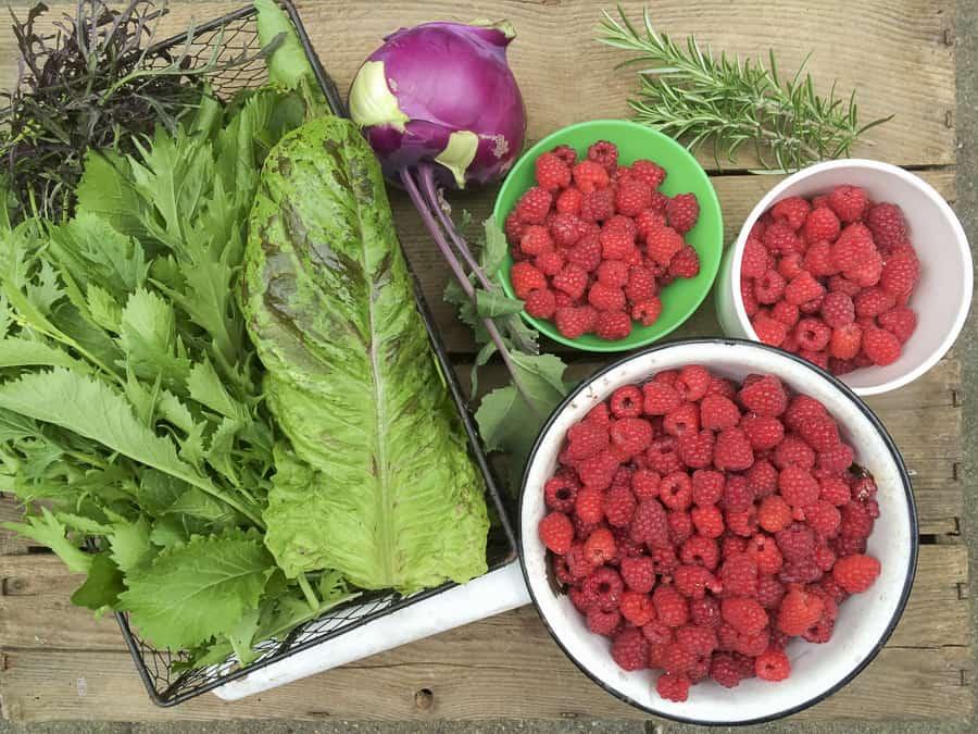 Gartenernte im Juni, Asiatischer Pflücksalat, Kohlrabi, Himbeeren