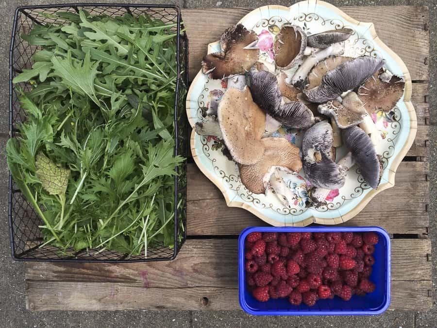 Asiasalat, Braunkappen, Himbeeren, Pilze