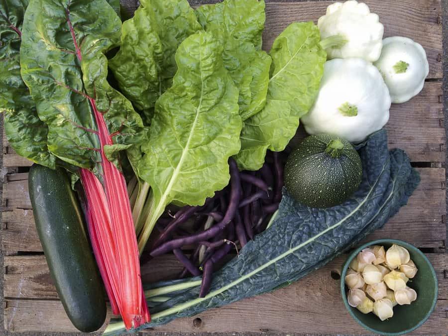 Ernte im Juli, Mangold, Palmkohl, Zucchini, Patisson, Ananaskirschen, Bohnen