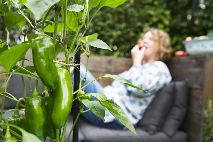Gemüse in Töpfen an der Palettenlounge