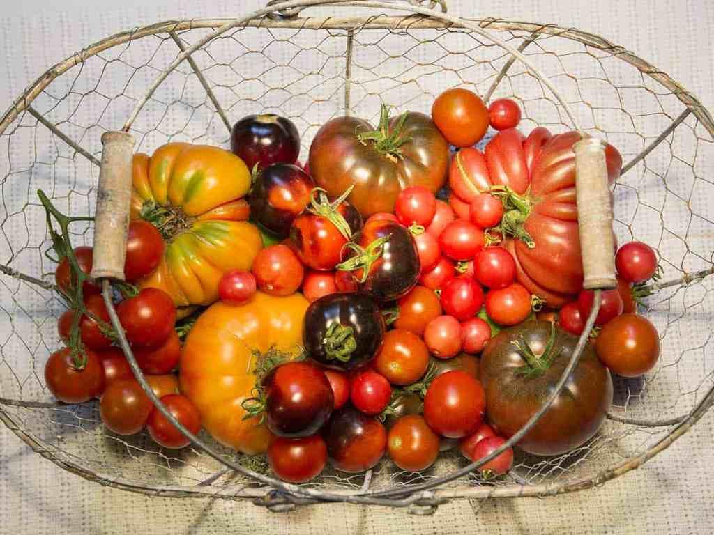 Korb mit alten Tomatensorten
