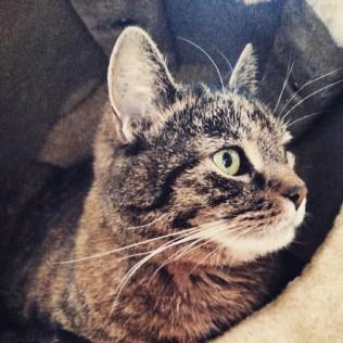 Wir haben uns eingekuschelt newLinecatsofinstagram cat katze miau gemtlich