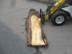 Tischplatte aus Massivholz Pappel S-00068