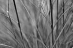 Ohne Farbe (6) – Gras