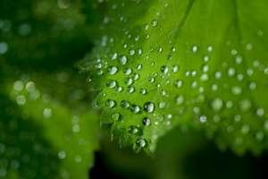 webfoliar