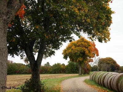 Die Blätter färben sich