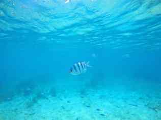 De Reizigers - Koh Phangan - snorkelen