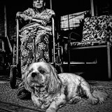 Old Woman in Wheelchair with Small Dog
