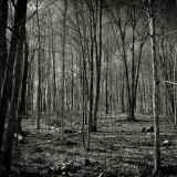 Dead Forest Black and White Nature Background