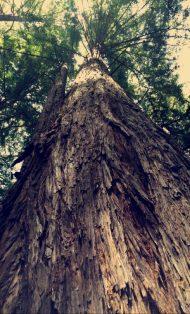 Derek's post on his Snapchat account on April 29, 2016 Courtesy derekhough snapchat