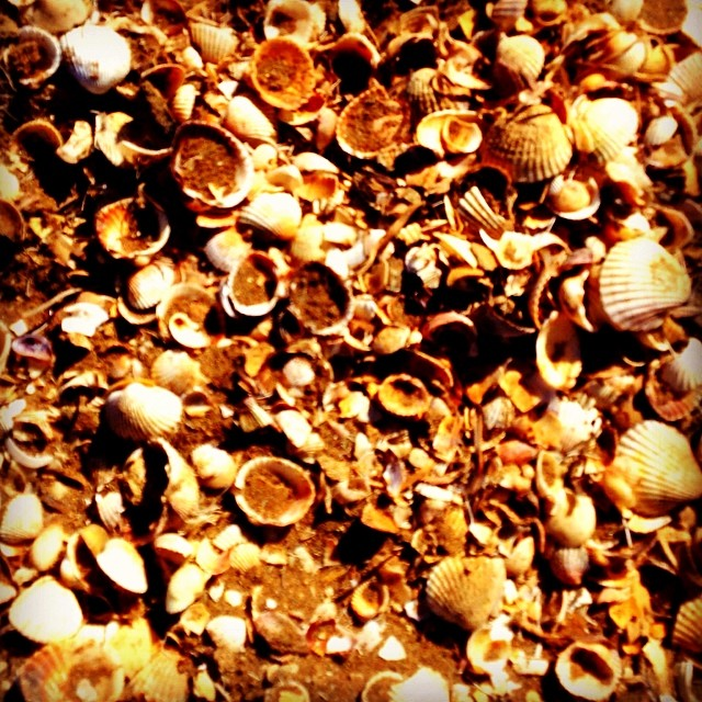 #marmenor #murcia #spain #españa #seashells #caracol - from Instagram