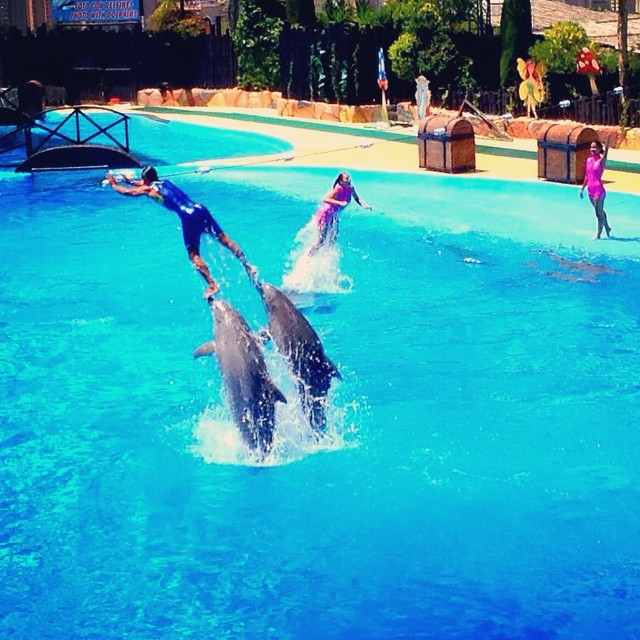 #dolphin #delfin #mundomar #benidorm #costablanca #spain #españa - from Instagram