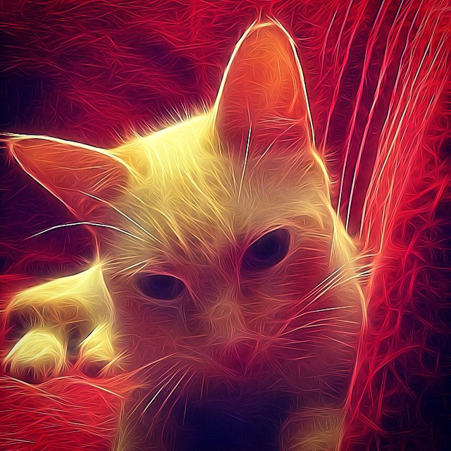 #torrevieja #costablanca #spain #españa #cat #gato - from Instagram