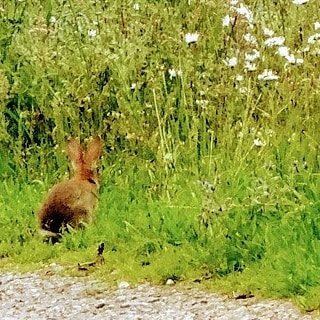 Come over here you scwewy wabbit. - from Instagram