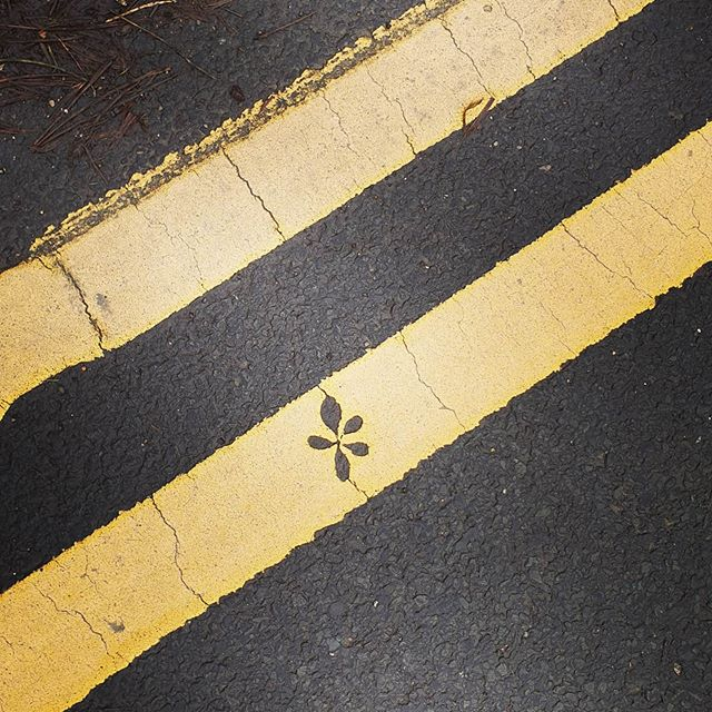 #autohash #UnitedKingdom #England #asphalt #road #tarmac #pavement #street #roadway #tar #lane #texture #urban #traffic #guidance #line #pattern #avenue #abstraction #crossing #bitumen #doubleyellow #leaf - from Instagram