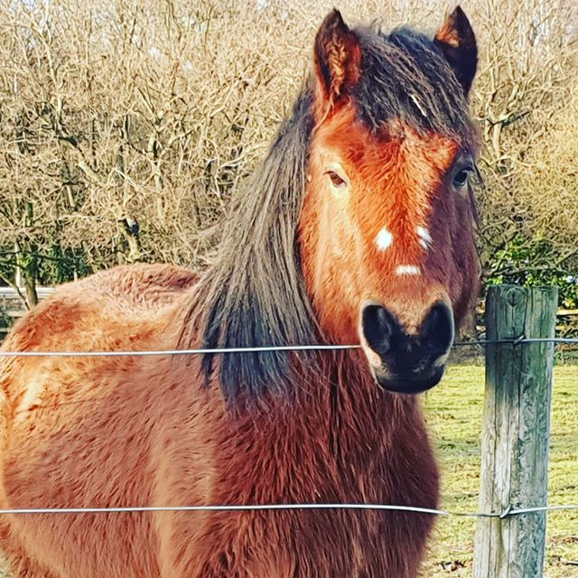 #autohash #UnitedKingdom #England #cavalry #mammal #mane #animal #farm #pasture #nature #grass #rural #mare #pony #agriculture #stallion #field #head #livestock #cute #equine - from Instagram